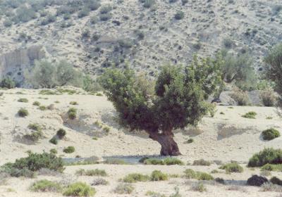 khouja-5