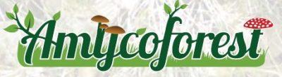 logo-amycoforest